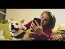 Google AdWords: История Dogsy.ru
