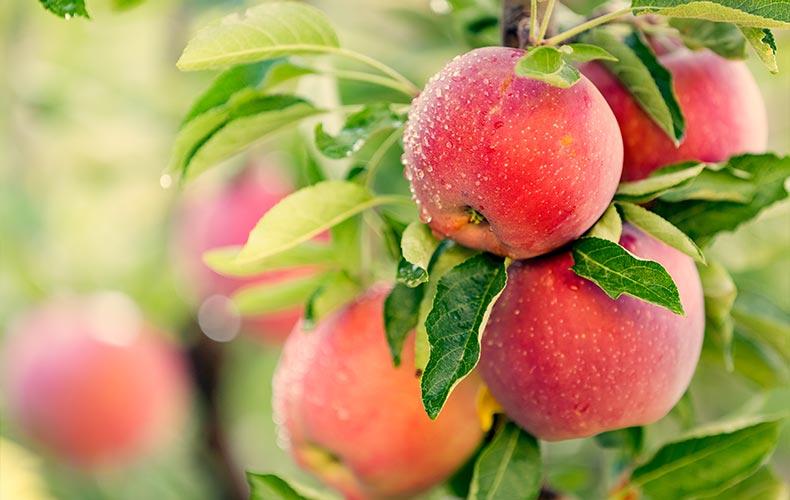 Как «придумывают» детское фруктовое пюре? Спросите «ФрутоНяню»