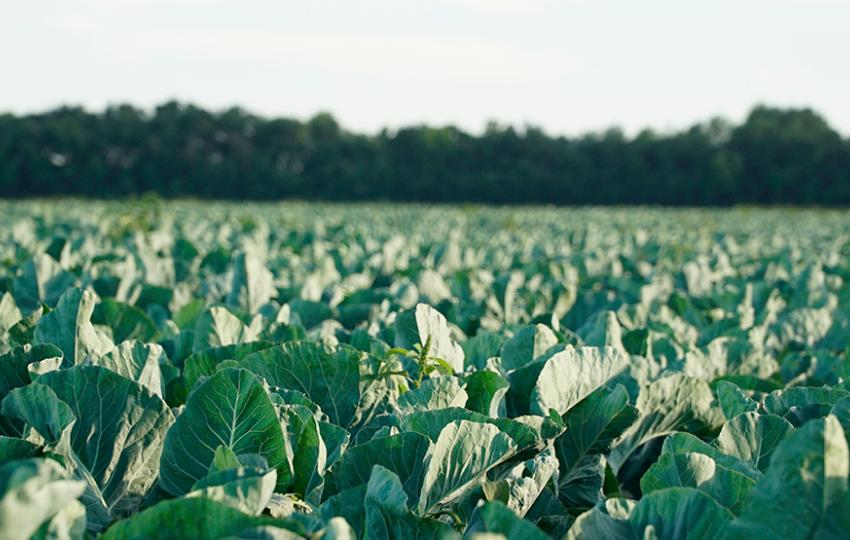 «ФрутоНяня» вносит вклад в развитие Российского сельского хозяйства