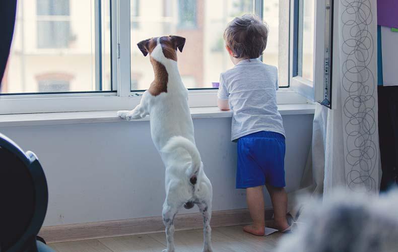Как научить ребёнка общаться с домашними животными